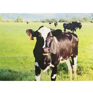 particularcow